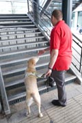 Vision-impaired-man-and-guide-dog-prepare-to-climb-some-steps,
