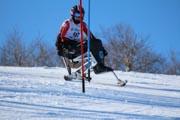Alpine-sit-ski-racing