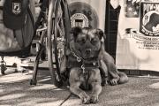 Service-dog-sitting-next-to-wheelchair