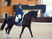 Boneo-Park,-Melbourne,-Australia.-18-October,-2017.-Equestrian-Australia-Para-Equestrian-Grade-4-Individual-Competition.-Ceasy-ridden-by-Sharon-Jarvis